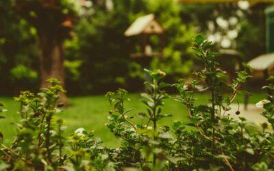 Après le confinement, des envies de maisons avec jardin